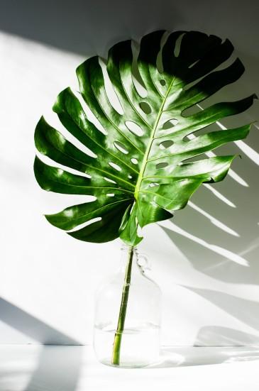 rose+&+ivy+journal+botanicals+monster+leaf